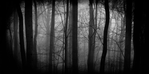 dark-forest-nature-hd-wallpaper-1920x1200-4660